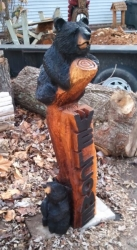 bear-tree1